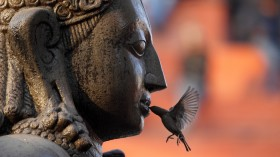 A sparrow feeds on an offering placed in the mouth of the idol of Lord Garud in Kathmandu January 30, 2011