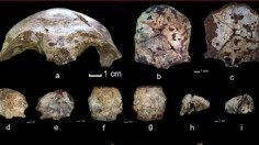 Researchers have discovered an ancient skull believed to be the oldest modern human fossil found in Southeast Asia.