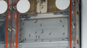 ants in space ISS