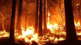 2013 Rim fire