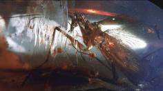 Prehistoric Cockroaches Were Mantis-Like Monstrosities
