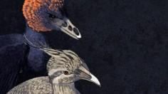 beak structure