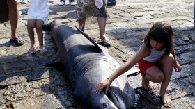 New species of sharks have been discovered. (Picture for representation purpose only) (Photo: Reuters)