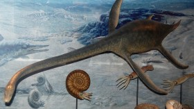 Plesiosaurs, seen here in a model, swam in the Late Cretaceous period, the Age of the Dinosaurs.