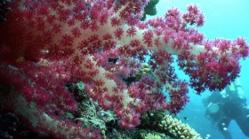 Pacific reefs near Palau could grow vertically and protect islands, if we monitor sea temperature change.