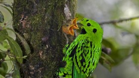 Tropical Songbird