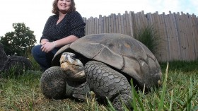 Janna Willoughby with a Galapagos giant tortoise
