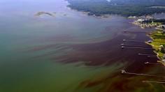Algal bloom in the Chesapeake Bay