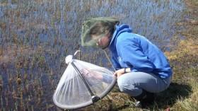Dartmouth Arctic Mosquito Study