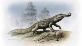 Crocodylian