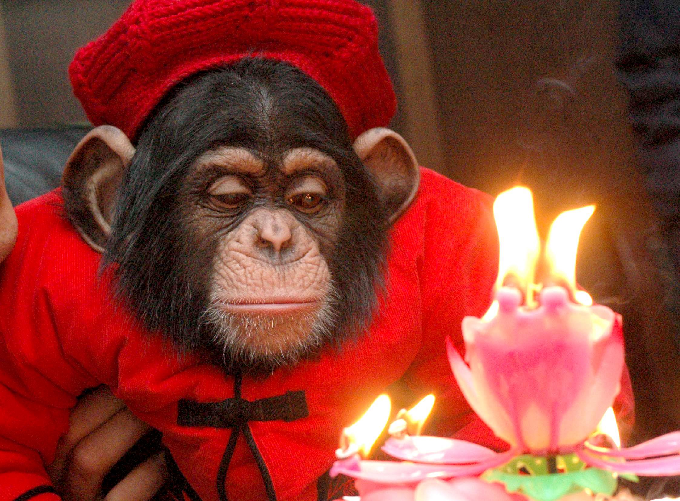 Картинки, открытки день обезьяны