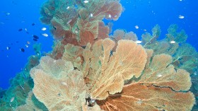Chagos Marine Reserve in the Indian Ocean