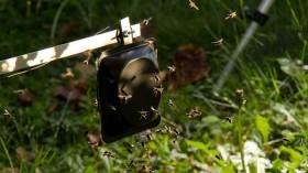 Wasp Alarm Pheromones