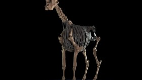 Ancient Giraffe