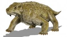 Pareiasaur
