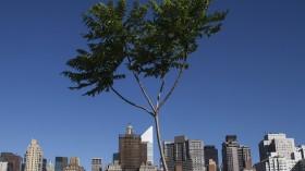 Tree in New York City