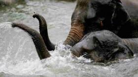Asian Elephants Arrive At Taronga Zoo