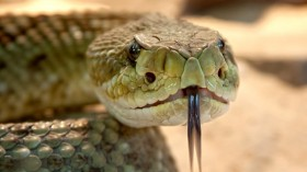 Venoms May Be Harmful But There Is More To Them Yet To Be Revealed
