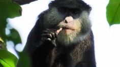 Monkey eating bat