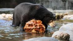 Surabaya Zoo Works To Improve Animal Care Standards