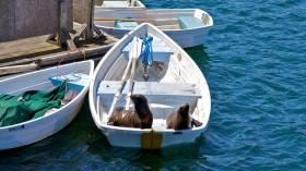 Sea lion boat