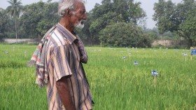 Farmer of Rajshahi, Bangladesh