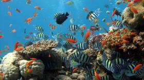 fish coral reef