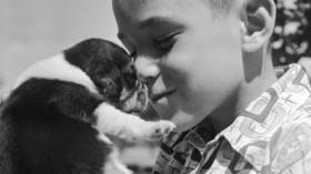 A boy gives love to a pet beagle puppy