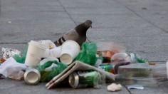 Food Waste Reduction Could Threaten Birds, Animals