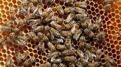 Beekeepers Report Alarming Decline in Bee Populations