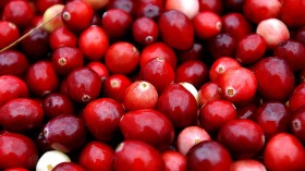 Colorful Cranberry Bogs