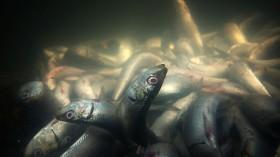 Climate Change Destroying Underwater Ecosystem