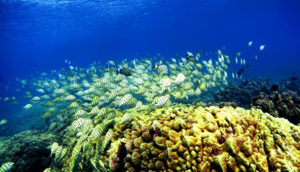 Corals with high genetic diversity are betteer at surviving climate change