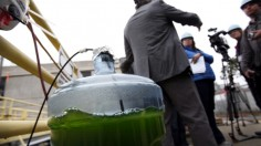 Marine microalgae is the food and fuel of the future