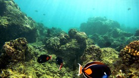 Threat to Great Barrier Reef?