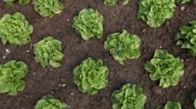 Organic Farmers Profit From EHEC Outbreak