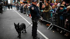 Dog sniffing device more effective in detecting explosives