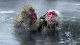 First 3D-Printed Blood Vessel Transplant Successful in Monkeys! Biotech Breakthrough on the Way