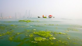 Algae could inspire design of artificial light-harvesting systems