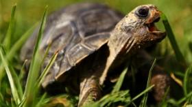 The reason behind Galápagos Islands' unique ecology