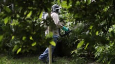 Pesticide Ban: Evidence Links Chemicals to Bird, Bee Deaths, Exctinction Threats