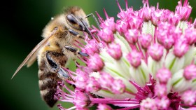 Did You Know: Bees Get 'Surprised' When They Bump Into Each Other - How Does This Work