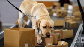biosecurity dog
