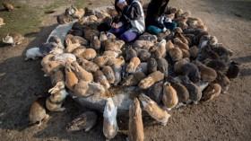 Bunnies Attract Tourists To A Japanese Islet Okunoshima