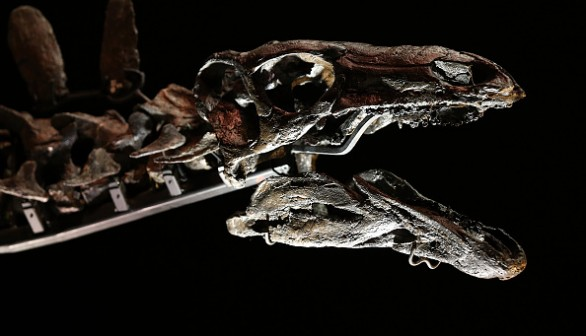 Complete Stegosaurus Fossil Unveiled At Natural History Museum