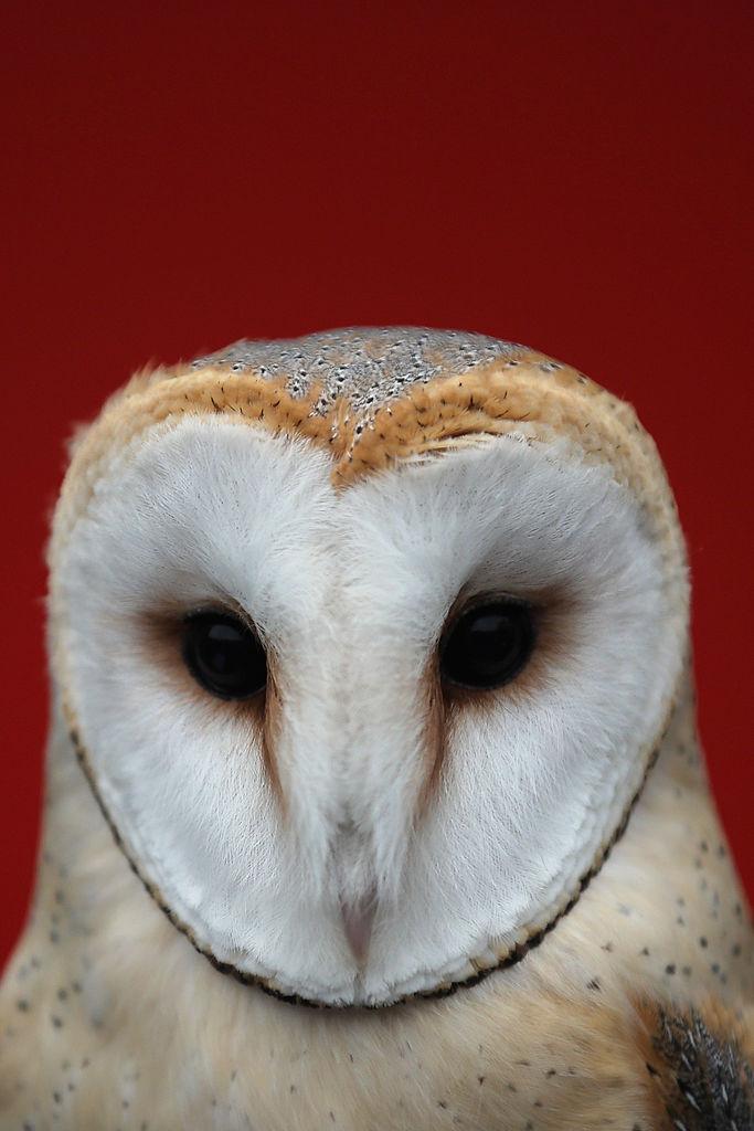 Cuteness Alert! Box of Baby Barn Owls Found in Texas ...