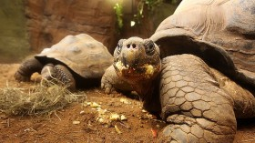London Zoo Opens New Giants Of The Galápagos Exhibit
