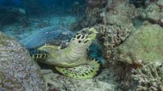 Aquatic life in Indian Ocean