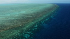Great Barrier Reef Threatened with extinction within 20 years
