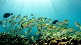 Hawaii Coral Reefs